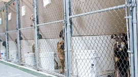 Chicago shelter runs out of adoptable animals for first time ever amid coronavirus crisis