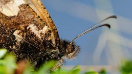 Insect extinctions threaten our way of life, scientists warn