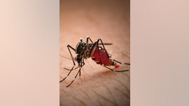 Can mosquitoes spread coronavirus?