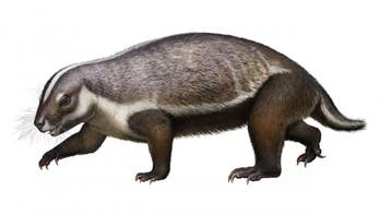 66M-year-old 'crazy beast' discovered in Madagascar: An 'animal for which we don't have any real parallels'