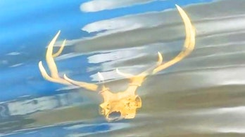 New Mexico wildlife officer finds elk skull submerged in shallow water