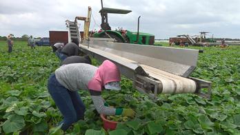 Coronavirus pandemic hits Florida's farmers hard as many on verge of total-loss in early growing season