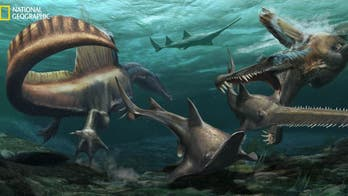 Terrifying Spinosaurus had powerful tail, becoming first known aquatic dinosaur