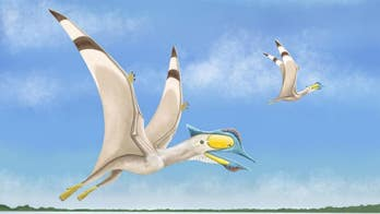 Remains of 100 million-year-old flying pterosaur with 6-inch beak unearthed by scientists