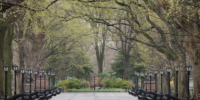 """A New York City councilman saidif the number of coronavirus deaths overwhelms morgues, a contingency plan would use a city park for """"temporary interment."""""""