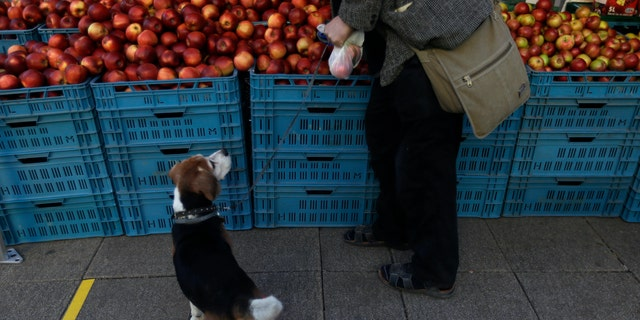 A man shops for apples as the farmers markets open in Prague, Czech Republic, Monday, April 20, 2020. Czech Republic has started to ease some of the restrictions that were applied in efforts to stem the spread of the new coronavirus. (AP Photo/Petr David Josek)