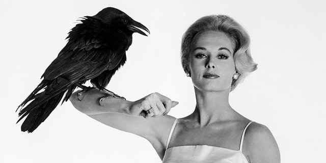 "Tippi Hedren poses with Buddy, the Raven, between scenes of Alfred Hitchcock's ""The Birds."""