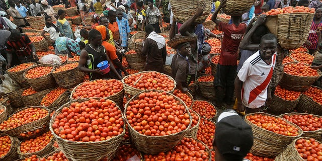 Citizens buy tomatoes from a vegetable market in the commercial capital Lagos, Nigeria. Lockdowns in Africa limiting the movement of people in an attempt to slow the spread of the coronavirus are threatening to choke off supplies of what the continent needs the most - food. (AP Photo/Sunday Alamba)