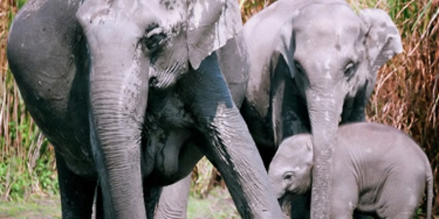 Over 1,000 elephants in Thailand could be facing starvation as the COVID-19 pandemic has greatly impacted revenue generated from tourism in the country.