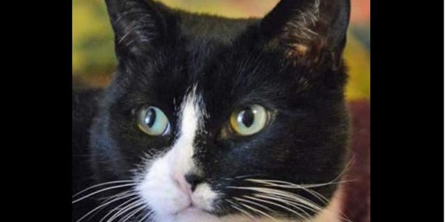 Two pet cats tested positive for COVID-19 in New York.