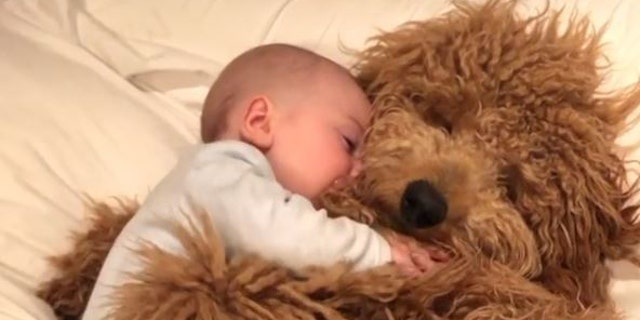 An adorable video of baby Theo snuggling up with pet Samson has gone viral on Instagram.