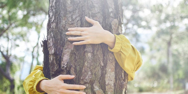The forestry services are not just suggesting citizens find a tree to hold, however, they are also encouraging people to get outside in general and engage in outdoor activities as a safe way to relax and de-stress.