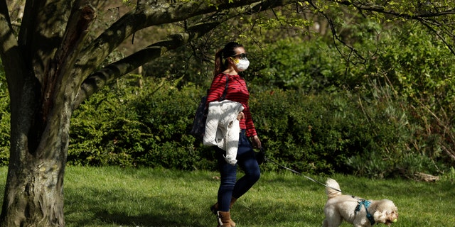 A dog walker wears a face mask in Regent's Park, London, as London's parks remain open with the warning that they will close if people fail to observe the British government guidelines that include two meters social distancing from people that don't live in the same household, to help stop the spread of coronavirus, Saturday, April 4, 2020. The new coronavirus causes mild or moderate symptoms for most people, but for some, especially older adults and people with existing health problems, it can cause more severe illness or death. (AP Photo/Matt Dunham)