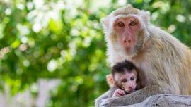 Siberian zoo sees boom of animal births during lockdown