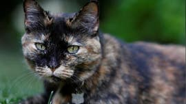 Cat in France that contracted COVID-19 survives infection