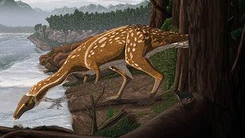 Unusual 'toothless' dinosaur discovered in Australia