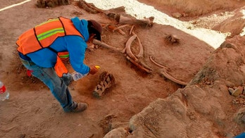 Experts find bones of dozens of mammoths in Mexico City