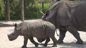 Zoos struggle to cover expenses without visitors: 'We're approaching a tipping point'