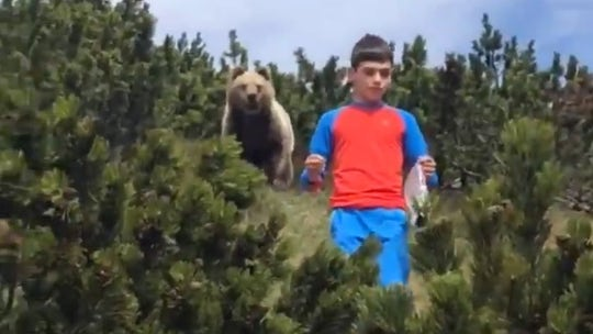 Italian boy, 12, encounters bear on family hike and somehow remains completely calm