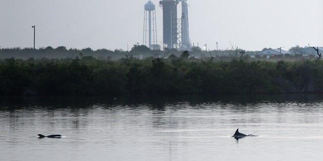 Dolphins swim in a lagoon near Launch Complex 39A at sunrise at Kennedy Space Center in Florida on May 30, 2020.