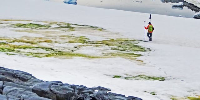 Go Green! Antarctica's Snow is 'Changing Colour Due to Climate Change'