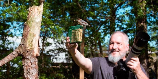 In this April 27 photo, amateur bird watcher Michael Kopack Jr. holds his camera in the background while two nuthatches land nearby in Angier, N.C.