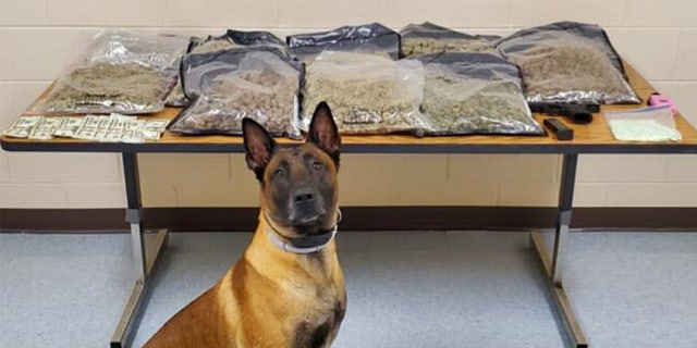 A traffic stop led to large the seizure of 15 pounds of marijuana and the arrest of a Fort Campbell soldier. K-9 Harry participated in the bust..
