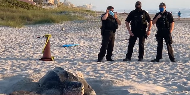 Local deputies arrived to stand guard over the endangered creature's nest. (Courtesy: Shelly Michel)