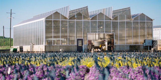 The flowers are coming from small business growers and nurseries that Lowe's said may have experienced slowed business amid the outbreak. (Photo: Lowe's)