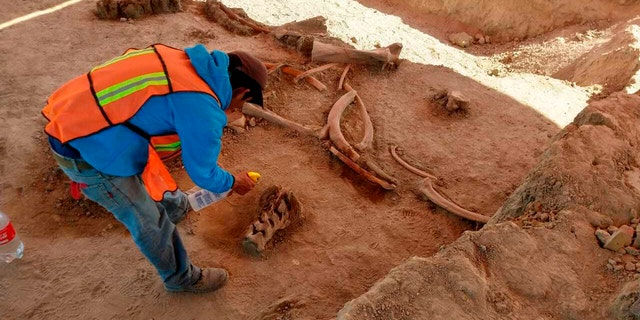Westlake Legal Group Mammoth-Mexico-AP Experts find bones of dozens of mammoths in Mexico City Peter Aitken fox-news/world/world-regions/latin-america fox-news/us/immigration/mexico fox-news/columns/digging-history fox news fnc/science fnc cc82988f-4f12-5740-a487-e9e8003f6a90 article