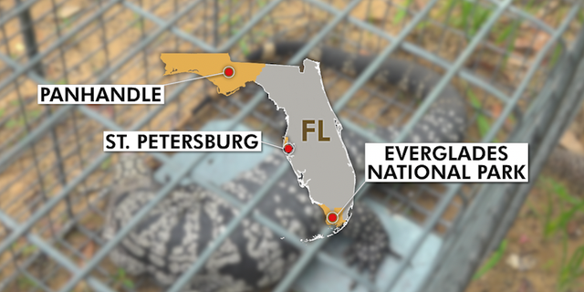 Map shows areas in Florida that have been impacted by Tegu lizards.