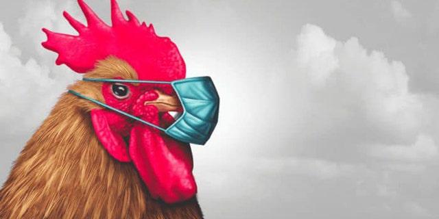 Fowl play: Louisiana police search for 'aggressive chicken'