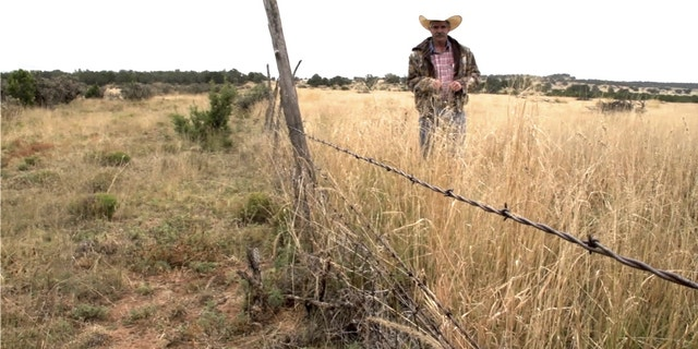 Ranney Ranch manager Melvin Johnson stands on Ranney side of fence, comparing their forage production to that of their neighbors to the left. Corona, New Mexico