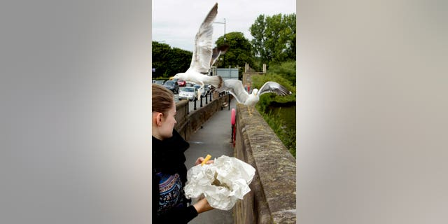 A foodbank has urged people to only drop donations off when they are open to prevent gulls from stealing the food.