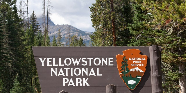"""""""Wildlife in Yellowstone National Park are wild. When an animal is near a trail, boardwalk, parking lot, or in a developed area, give it space,"""" the NPS urged."""