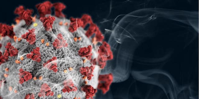 Smoking changes the lungs in ways that make the coronavirus more likely to bind to lung cells.