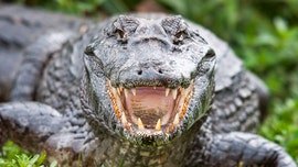 North Carolina man attacked by alligator while kayaking