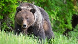 Grizzly bear fatally mauls hunter in Alaska state park