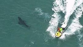 Australian surfer, 60, killed in shark attack involving 10-foot great white