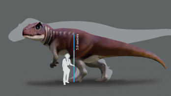'Jurassic Park' discovery: Giant footprints shed new light on huge carnivorous dinosaurs