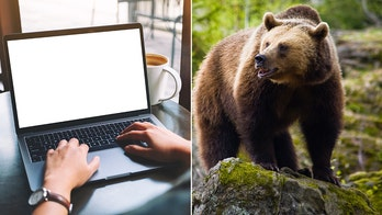 California woman hits bear with laptop after being attacked in her sleep