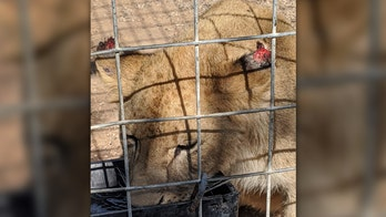 'Tiger King' star Jeff Lowe cited by USDA inspectors over veterinary-care shortcomings