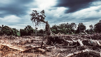Destruction of tropical forests worldwide increased in 2019, study shows