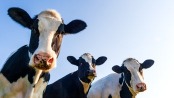 Human trials to start on coronavirus drug derived from cow blood
