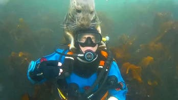 British diver photobombed after getting underwater cuddle from grey seal