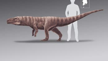120M-year-old crocodile that walked on its hind legs like T. Rex discovered