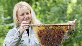 Devoted beekeeper risks her life every day despite deadly allergy