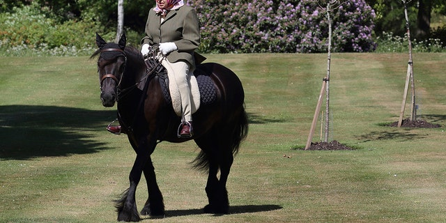 In this photo released on Sunday, May 31, 2020, Britain's Queen Elizabeth II rides Balmoral Fern, a 14-year-old Fell Pony, in Windsor Home Park over the weekend at the end of May, in Windsor, England. The Queen has been in residence at Windsor Castle during the COVID-19 coronavirus pandemic.