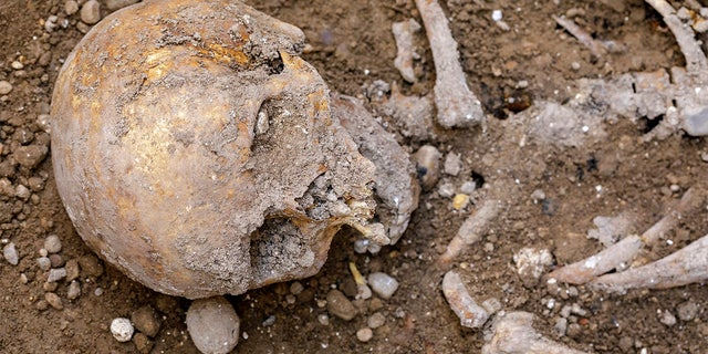 Some of the human remains uncovered during the excavation in Valladolid.