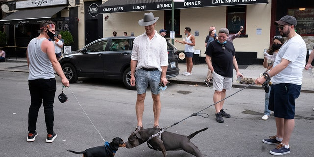 Dogs greet each other another nose-to-nose while people gather on a street in the Hell's Kitchen neighborhood of New York, Friday, May 29, 2020, during the coronavirus pandemic. The street has been blocked off from traffic to allow residents to gather in open spaces with some social distancing. (AP Photo/Mark Lennihan)
